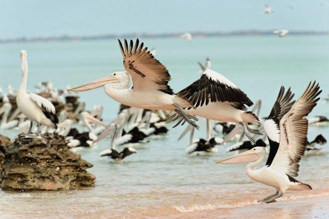 pelicansgroup